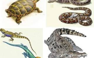 У пресмыкающихся в отличие от земноводных оплодотворение, чем отличаются амфибии от рептилий?