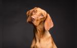 Собака внешний вид образ жизни повадки