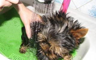 Как часто можно мыть собаку йорка: как купать йоркширского терьера?
