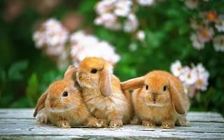 Что не умеют делать кролики: обиженный зайка