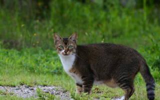 Липидоз печени у кошек, что это, эзофагостома у кошки