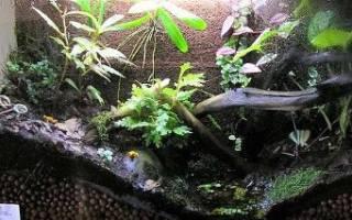 Как сделать из аквариума террариум