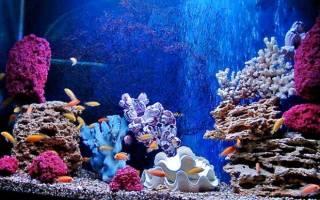 Грот из камней для аквариума своими руками