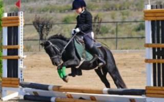 Конный спорт для детей польза и вред: плюсы и минусы верховой езды