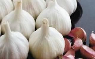 Сорта озимого чеснока для сибири