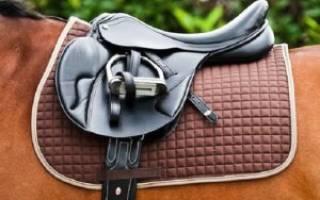 Как сшить вальтрап для лошади своими руками?