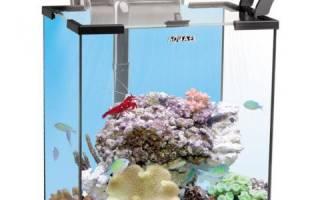 Как содержать морских рыбок в аквариуме?