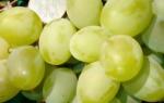 Сорт винограда подарок запорожья фото и описание