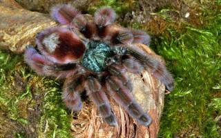 Чем кормить паука в домашних условиях?