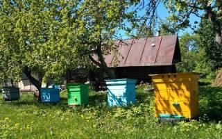 Как разводить пчел на даче?