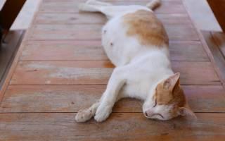 Когда шевелятся котята в животе у кошки?