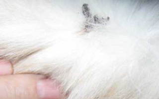 У кота на шее шишка, что это, у кошки шарики под кожей