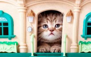 Как приручить взрослую кошку к новому хозяину — как расположить к себе кота?
