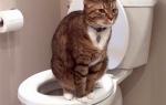 У кота кал с кровью причины