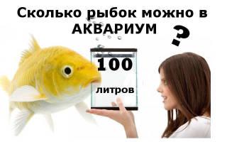 Какие рыбки подходят для аквариума 100 литров – сколько рыбок можно держать в 10 литрах?