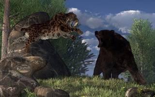 Кто сильнее белый медведь или бурый: сила удара тигра