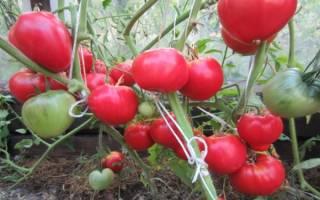 Турбореактивный томат для открытого грунта отзывы