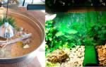 Как оборудовать террариум для сухопутной черепахи?