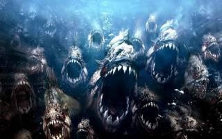Хищные рыбы для аквариума фото и название