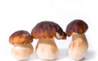Как заморозить белые грибы на зиму?