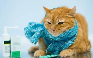 Кошка чихает лечение в домашних условиях