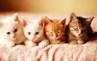 Нестандартные имена для кошек – имя для кота обычные