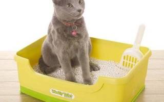 Как воспитывать кота чтобы не хулиганил, как ругать котенка?