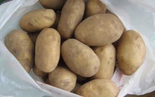 Сорт картофеля колобок характеристика отзывы