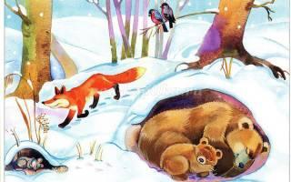 Дикие животные в лесу зимой, зимовка зверей