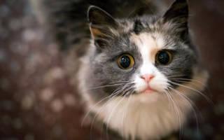 Паразиты у кошек фото с названиями – вши живут на кошках