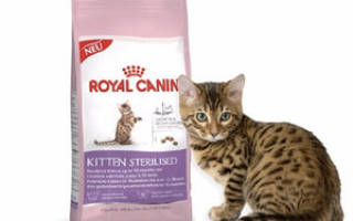 Роял канин для котят состав корма