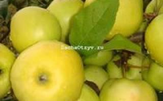 Яблоня чудное описание сорта фото отзывы
