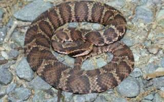 Температура тела змей: змеи теплокровные или холоднокровные?