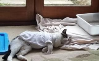 Кошка после стерилизации много спит и вялая