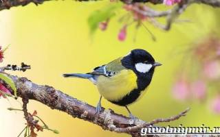 Где живут синички зимой в городе: зимующие птицы синица