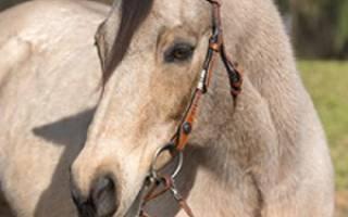 Как называется украшение на голове лошади – сбруя своими руками