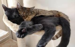 Кот во сне дергает лапами: кошка когда спит дергается