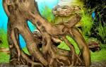 Подготовка коряги для аквариума своими руками