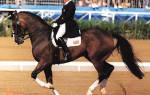 Как правильно сидеть на галопе: как скакать на лошади?