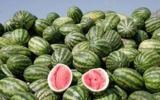 Сорт арбуза холодок фото и описанием