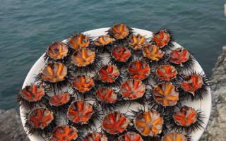 Сколько весит морской еж?