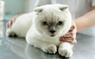 Химическая стерилизация кошек: хим кастрация