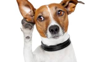 Как научить щенка команде ко мне?