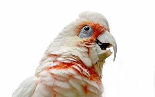 Попугай не точит клюв, что делать?