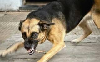 Стоп стресс для собак состав