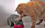 Кот заболел ничего не ест, что делать?