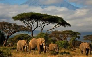 Сколько живет слон продолжительность жизни?