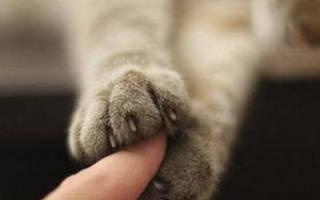 Чем можно усыпить кошку в домашних условиях: усыпление кошек как происходит
