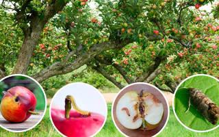 Обработка яблонь от болезней и вредителей