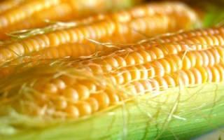 К какому классу относится кукуруза: злаки это овощи